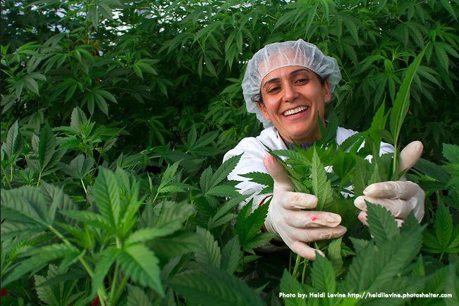 Коноплю бабушки выращивают конопли сайт заказов семян