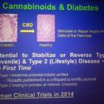 A kannabidiol (CBD) megakadályozza az autoimmun diabétesz kialakulását egerekben