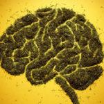 Klinikai kísérlet: A CBD kevés mellékhatással kezeli a skizofréniát