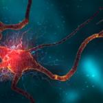 A CBD fokozza az új idegsejtek születését az agyban