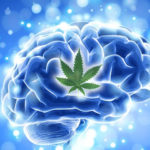 Tanulmány: A kannabisz elősegíti az új agysejtek képződését