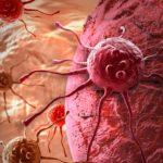 Egy japán tanulmány azt mutatja, hogy a kannabinoidok gátolják a tumornövekedést