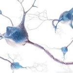 Tanulmány: A kannabiszban lévő CBC segíti az új agysejtek képződését