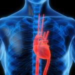 A CBD jelentősen csökkenti a kemoterápia okozta szívkárosodást