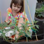 Kannabisz kivonatok epilepsziára