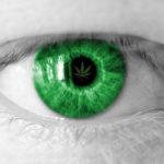Tanulmány: A kannabisz segíthet késleltetni a retina degenerációt és a látásromlást