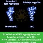 6 meglepő tény a THC-ról