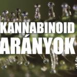 Kannabisz tudomány: Keressük meg a THC és a CBD optimális terápiás arányát