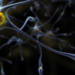 Tanulmány: Ultra-alacsony THC dózis védelmet nyújt az idegrendszeri betegségek ellen