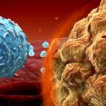 A kannabiszban található kannabinoidok csökkenthetik a melanoma sejtek életképességét