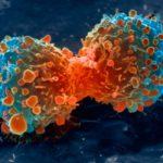 A növényi eredetű nem-pszichoaktív kannabinoidok tumorellenes aktivitása