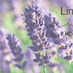 Terpén profil: Linalool