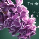 Terpén profil: Terpinolén