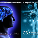 Az Endokannabinoid Rendszer, mint feltörekvő cél a farmakoterápiában