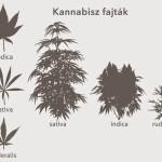 Kannabisz vagy indiai vadkender?