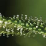 Növényi kannabinoidok