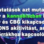 A kannabisz kikapcsolja a DNS-t ami A bőrrákhoz, allergiákhoz kapcsolódik