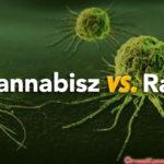 Kannabisz a rák ellen: A tanulmányok arra utalnak, hogy a kannabinoidok megölik az emberi rákos sejteket