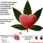 A THC védelmet nyújt szívroham ellen