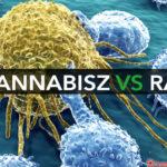 A kannabinoidok rákellenes szerként való használata