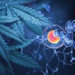 Szklerózis multiplex: Lássuk miért annyira hatékony a kannabisz