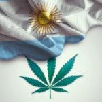 Egy argentin állam legalizálta a kannabiszolajat