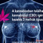 Kutatás: CBD kezelés mellrákra