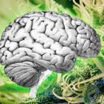 A CBD lehetséges kezelést nyújt katasztrofális epilepsziára