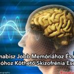 A kannabisz jobb memóriához és agyi funkcióhoz köthető skizofrénia esetében