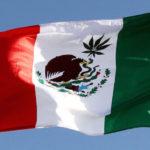 A mexikói szenátus elsöprő többséggel szavazta meg az orvosi kannabisz legalizálását