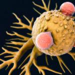 A THC meggátolja a melanomát egerekben