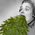 A kannabisz hyperemesis szindróma és az azadirachtin mérgezés
