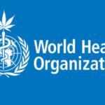 A WHO megtette az első lépéseket, hogy a nemzetközi jog értelmében újraütemezze az orvosi kannabiszt