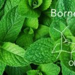 Terpének: Borneol