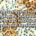 Egy gyógyszergyártó hamarosan megkapja a szabadalmat THC és CBD használatára agydaganat kezelésében