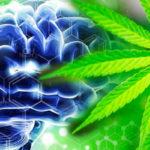 A GW Pharma a THC és CBD kombináció sikeres ereményeit jelenti a 2. fázisú klinikai vizsgálatokban agydaganatra