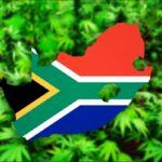 Dél-Afrika legalizálta az orvosi kannabiszt