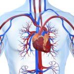 CBD és szívbetegségek