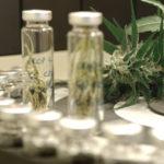Egy gyógyszercég megkapja a végleges jelentést a kannabinoidok rákellenes hatásairól