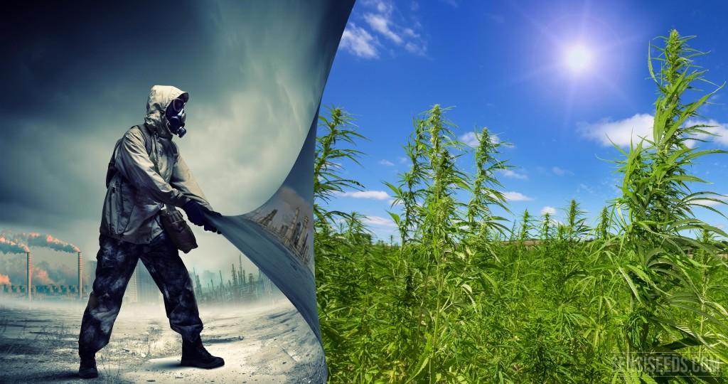 A kender a legjobb bioüzemanyag? | Magyar Orvosi Kannabisz Egyesület
