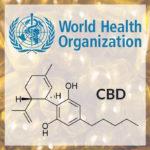 A WHO jelentése a CBD-ről