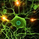 A kannabisz nem elpusztítja, hanem védi az agysejteket