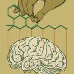 Az emberi szervezet tele van kannabisz-receptorokkal