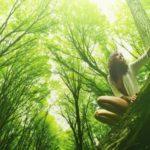 Terpének az erdőkből és az emberi egészség