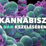 Kannabisz a rák kezelésében: Összefoglaló