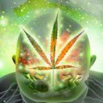 Drogemlékek: CBD és függőség