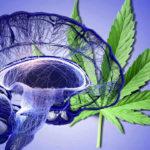 Fázis II., randomizált, kettős vak klinikai vizsgálat orvosi kannabisszal agydaganat kezelésére