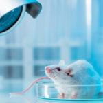Tanulmány: A kannabiszból származó CBD kemoterápiával kombinálva megháromszorozta a túlélési arányt rákos egereknél