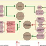 Összefoglaló a kannabinoidok rákellenes hatásáról, orvosoknak és betegeknek