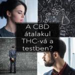 A CBD átalakul THC-vé a testben?